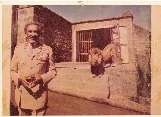 Selassie Lion