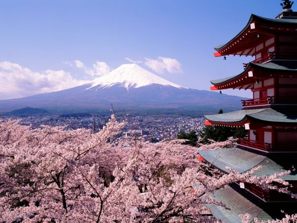 Mount Fuji and cherry blossoms!